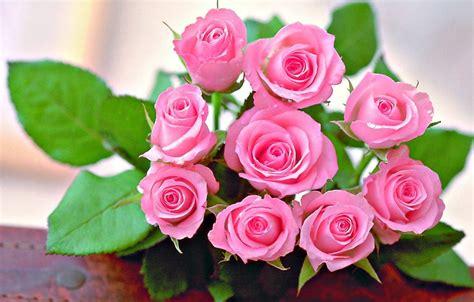 gambar bunga hd gambar wallpaper yg cantik gambar