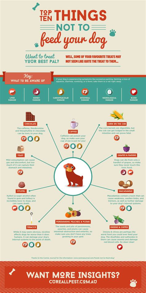 what not to feed dogs things not to feed your cure all pest