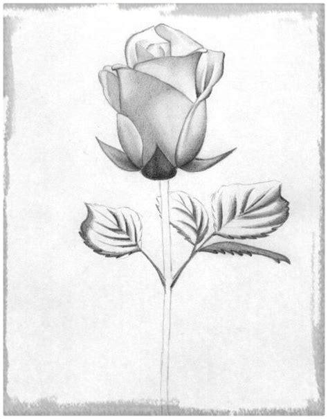 dibujos realistas a lapiz de flores rosas para dibujar a lapiz faciles para dedicar dibujos