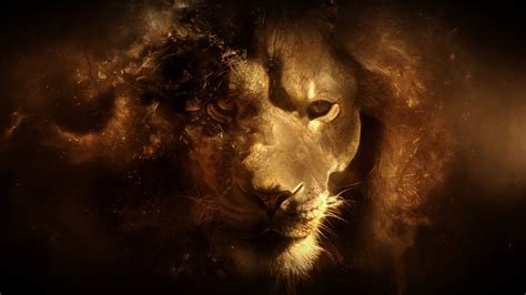 wallpaper hd 1920x1080 lion lion full hd wallpaper and background image 1920x1080