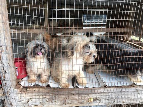 how to report a puppy mill arrested after inhumane conditions found at his