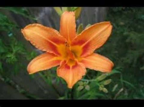quel mazzolin di fiori testo quel mazzolin di fiori doovi