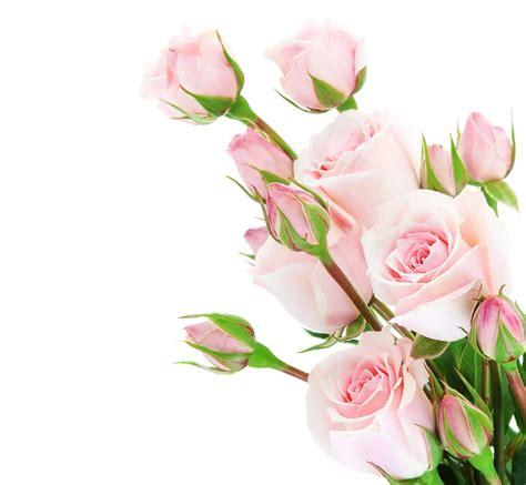 rosas para escribir banco de im 193 genes 20 postales con flores para escribir