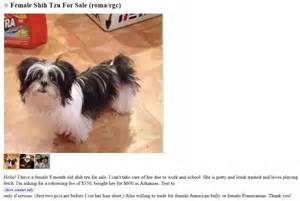 Craigslist Puppies Craigslist Dogs Related Keywords Suggestions