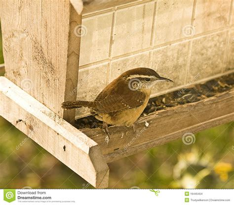 wren on feeder stock images image 16445454