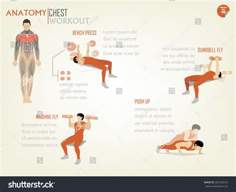 the graphic design exercise 144033532x beautiful design info graphic of chest workout consist of bench press dumbbell fly machine fly