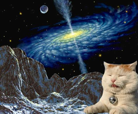 space cat wallpaper tumblr space cats on tumblr