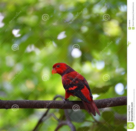 Birds Live On by Parrot Bird Stock Photo Image 61786918
