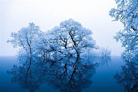 nature inspiration trees  photo  pixabay