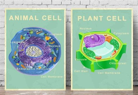 printable animal and plant cell 17 best images about palaeo prints on pinterest ancient