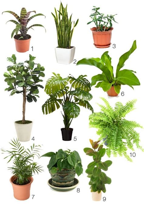 indoor plants how to create your own lush winter blues beating 70s