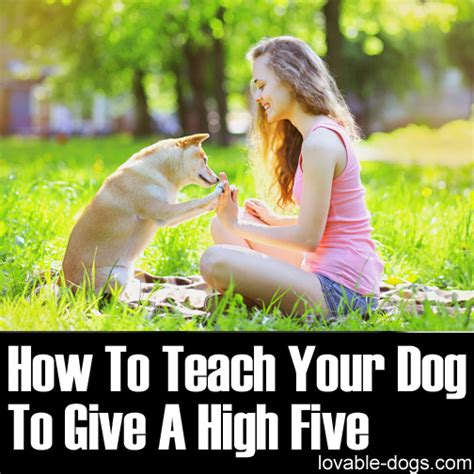 how to give a puppy a lovable dogs how to teach your to give a high five lovable dogs