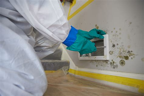 mold myths use vinegar or to remove mold see the right answer