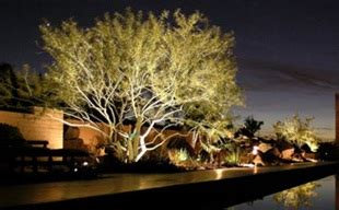 outdoor lighting landscaping services in woodinville