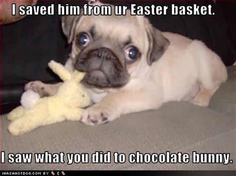 Funny Easter Bunny Memes - picture gallery funny dog pictures with captions videos