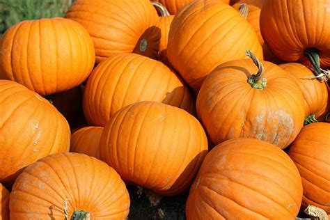 pictures of pumpkins free photo pumpkins yellow vegetables food free