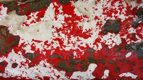 images tree white texture leaf flower rust