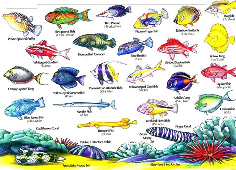 the ultimate guide to hawaiian reef fishes sea turtles hawaiian fish names aloha joe in hawaii a visual guide