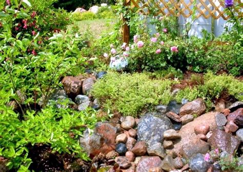 Where To Purchase Rocks For A Rock Garden Fascinating Where To Buy Rocks For Garden