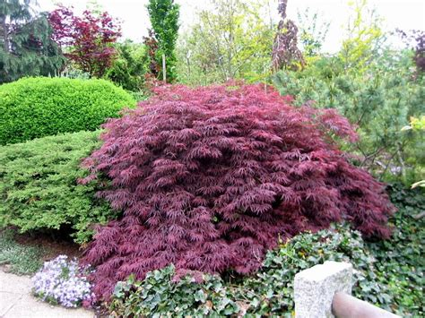 Garten Pflanzen Saurer Boden by Moorbeet Geh 246 Lze Die Sauren Boden Ben 246 Tigen Oder Vertragen