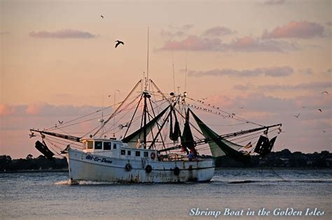 shrimp boat orange beach 36 best shrimp boats images on pinterest fishing boats