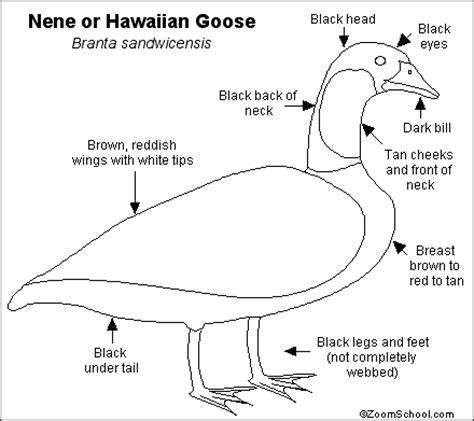 nene bird coloring page nene or hawaiian goose printout enchantedlearning com