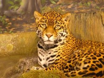 Imagenes De Jaguar Energy   jaguar fotos y vectores gratis