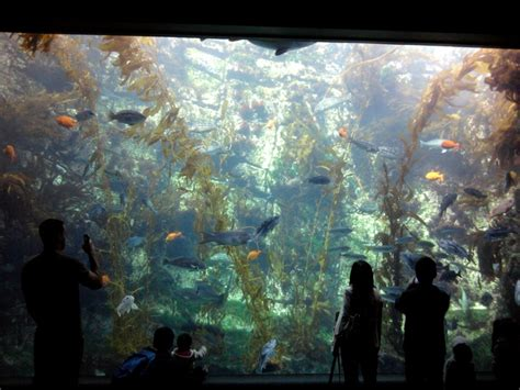 aquarium design san diego aquariums in san diego house of fishery lovers