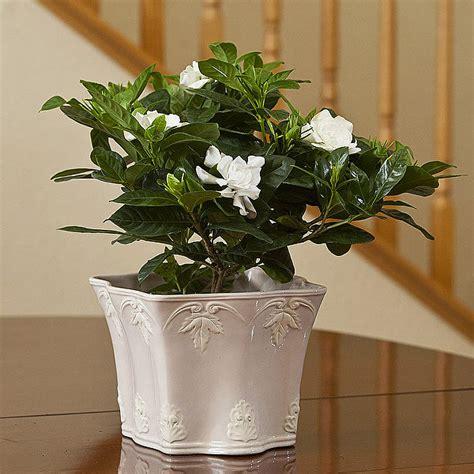 best plants for bathrooms 5 best plants for green bathroom quiet corner