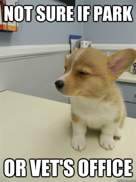 Corgi Birthday Meme - corgi corgi lolz pinterest parks puppys and corgis