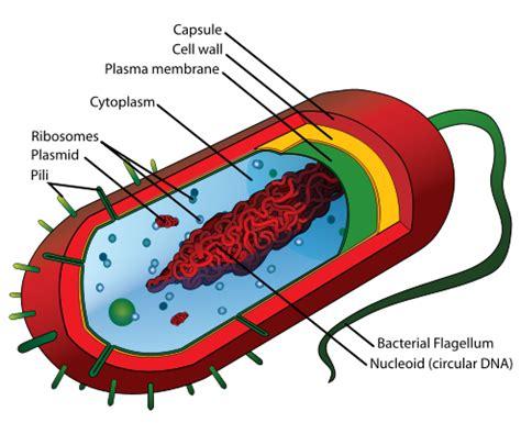 cells biology  biological principles