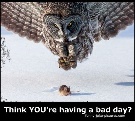 Having A Bad Day Meme - bad day owl mouse meme funny joke pictures