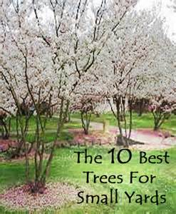 trees for small backyards 10 best trees for small yards diy