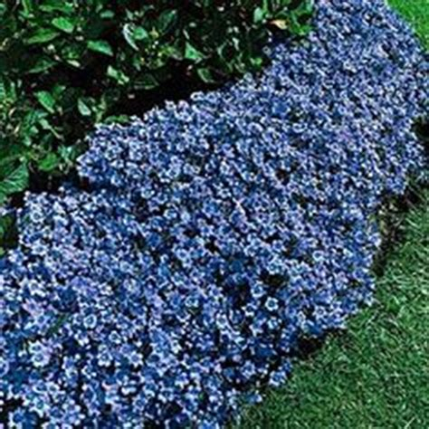 low covering flowers on pinterest perennials ground cover plants and drought tolerant