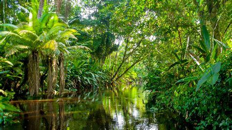 amazonas hängematte brasil o pa 205 s do futuro amazonas e o tratado das