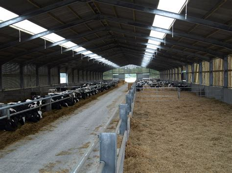 calf housing design calf housing design 28 images small scale dairy calf and cattle housing center for