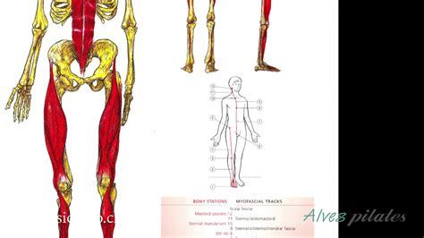 que son las cadenas musculares youtube - Cadenas Musculares Youtube