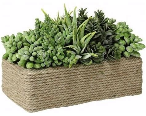amazon succulents succulents in rectangular wound rope pot traditional