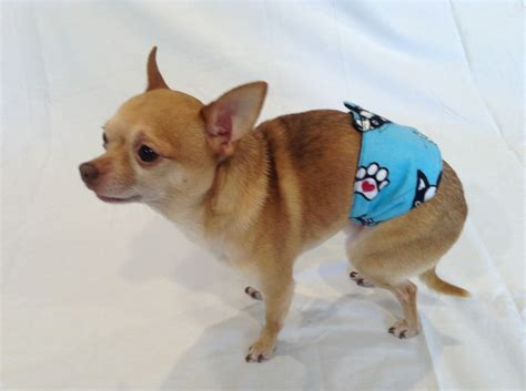 belly bands for dogs belly bands for and marking belly wrap