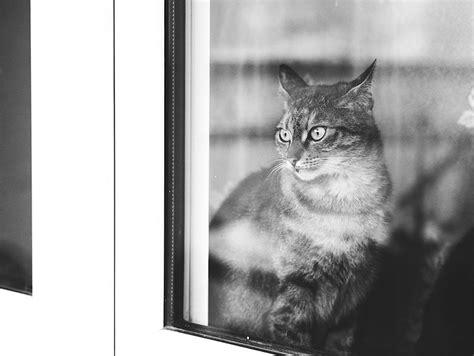Black Lovely Cat lovely pictures of cats in black and white 9 fubiz media