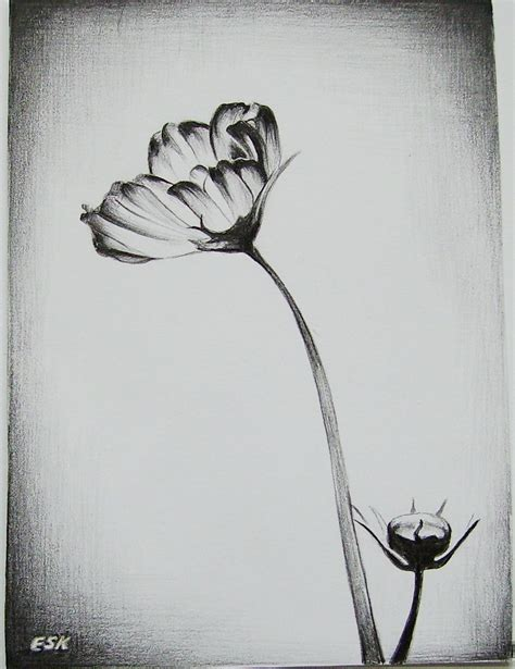 Sketches In Pencil by Best Pencil Sketches Of Flowers Pencil Drawing Collection