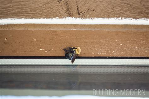 bees in house siding carpenter bee trap
