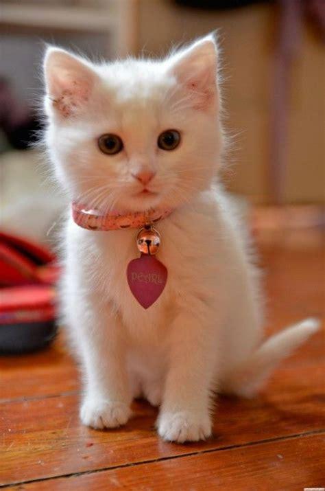Supercat Kitten 800gr white kittens stuff and kittens on