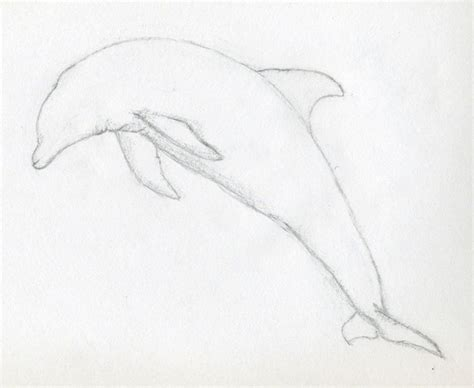 drawing easy draw a dolphin jus 4 kidz