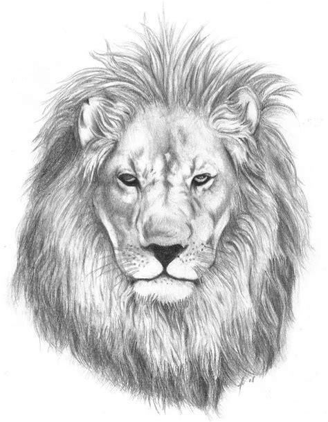 lion tattoo sketch vevtor pesquisa trabalhos em couro