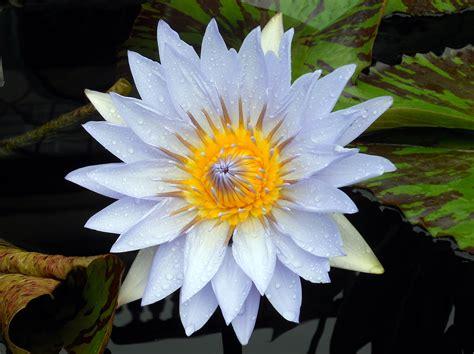 Free Stock Photo Of Blue Flower Garden Blue Flower Garden