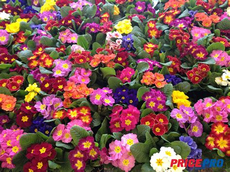 flowers flower birthday flowers picture s world