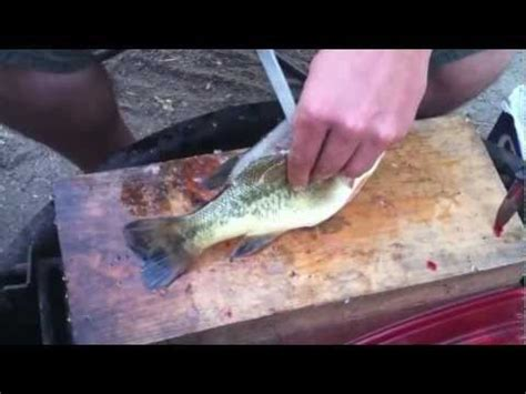fillet a crappie how to fillet and fry perch crappie bass