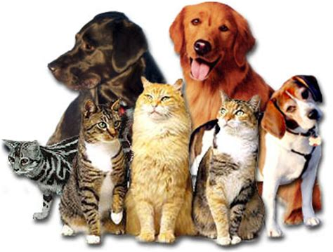 Different breeds of dogs, cats need different care
