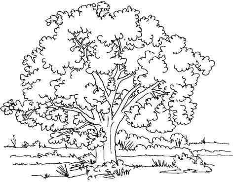 walnut tree coloring page dibujos para colorear de arboles plantillas para colorear